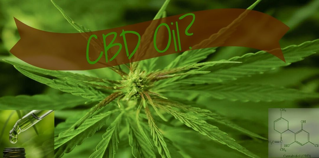 What Is, Why Use and Which One – CBD Oil?